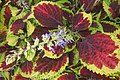 Foliage plant (SG) (32861961981).jpg