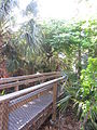 Foot bridge at John D. MacArthur Beach State Park - Riviera Beach, Florida.jpg