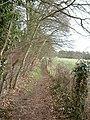 Footpath in Thornton Manor Estate - geograph.org.uk - 718081.jpg