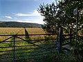 Footpath near the Garey. Isle of Man. - geograph.org.uk - 37687.jpg