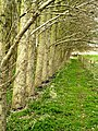 Footpath next to a Copse - geograph.org.uk - 730396.jpg