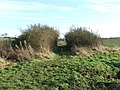 Footpath through hedge - geograph.org.uk - 1116034.jpg