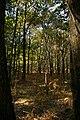 Forêt de Rambouillet — automne 2018 (2).jpg