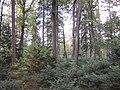 Forêt de la Ville de Strasbourg 1.JPG