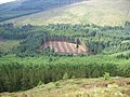 Forestry clear fell - geograph.org.uk - 502543.jpg