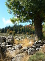 France Lozère Parc national des Cévennes Les Urfruits 10.jpg