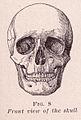 Front View of Skull.jpg