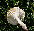 Fungi - Flickr - gailhampshire (2).jpg