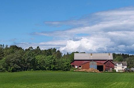 Gåseberg Sheep Farm