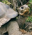 Galapagos17.jpeg