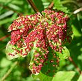 Galls - Flickr - gailhampshire.jpg