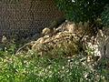 Garden Way - Wall - trees - streamlet - 17 Shahrivar st - Nishapur 38.JPG