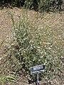 Gardenology-IMG 4965 hunt10mar.jpg