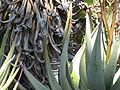 Gardenology.org-IMG 0289 hunt07mar.jpg