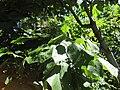 Gardenology.org-IMG 0454 rbgs10dec.jpg