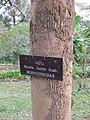Gardenology.org-IMG 7153 qsbg11mar.jpg