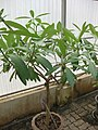 Gardenology.org-IMG 7919 qsbg11mar.jpg