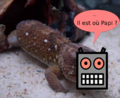 Geckbot.png