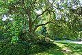 General view - VanDusen Botanical Garden - Vancouver, BC - DSC06832.jpg
