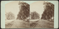 Genesee Street, Utica, from Cottage St. looking down, by C. H. Scofield.png