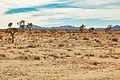 Geology Tour Road, Joshua Tree National Park, California (23743150170).jpg