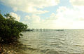 Gfp-florida-keys-tavernier-key-shore-view.jpg