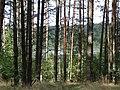 Gmina Piecki, Poland - panoramio (185).jpg