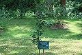 Godawari Botanical Garden 123642.jpg
