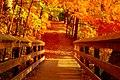 Golden Bridge (3023749962).jpg