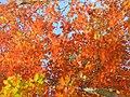 Goldener Herbst (Golden Autumn) - geo.hlipp.de - 29907.jpg