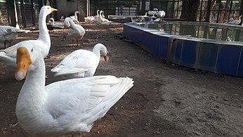 VOC park and zoo - Wikipedia