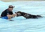 Gotcha in the water (10555982606).jpg