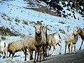 Grand Teton National Park (8479809332).jpg