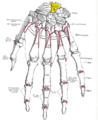 Gray220 - Lunate bone.png
