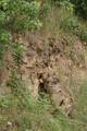 Grossenlueder Mues Kalkberge Outcrop a.png