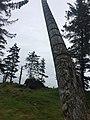 Gwaii Haanas National Park (27277729830).jpg
