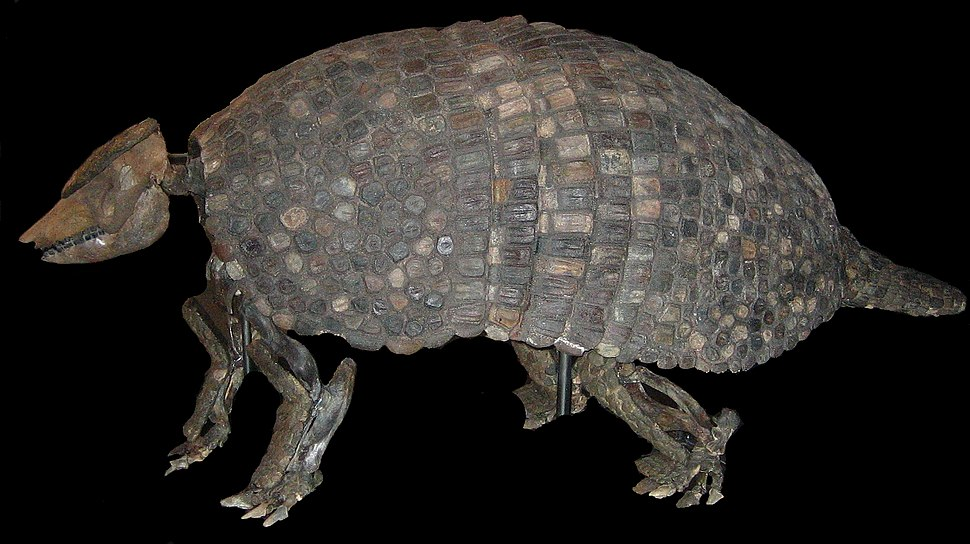 Gyptodon Cosmo Caixa