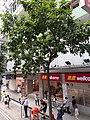 HK Tram 92 view 灣仔 Wan Chai 莊士敦道 Johnston Road October 2019 SS2 03.jpg