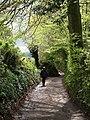 Haldon Lane near Little Oak Lodge - geograph.org.uk - 1281977.jpg