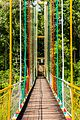 Hanging bridge view from the middle.jpg