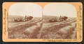 Harvesting in the great West, combined reaper and thresher, Washington, U.S.A, by Singley, B. L. (Benjamin Lloyd) 2.png