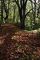 Hasenbach-Wald Wimsen Schwaebische Alb.jpg