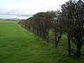Hedge Near Upper Mains - geograph.org.uk - 565072.jpg