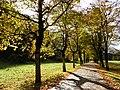 Herbstliche Bergahornallee Oytal.jpg