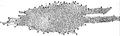 Herschel-Galaxy.png