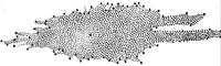Notre Galaxie vue par Herschel en 1785; le système solaire est supposé près du centre.