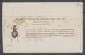Heteracantha - Print - Iconographia Zoologica - Special Collections University of Amsterdam - UBAINV0274 011 09 0003.tif