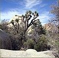 Hidden Valley, Joshua Tree NP 4-13-13d (8689099393).jpg