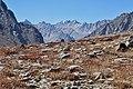 Himalayan Bistort Jankar Nala Lahaul Oct20 D72 18152-161 ZSd.jpg