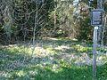 Hinterzartener Moor 1130071.jpg